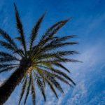 Ibiza-Party-Trip-plabo-3078